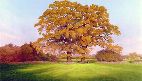 Surrey oaks IV - Autumn