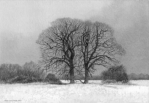 Surrey oaks V - Winter