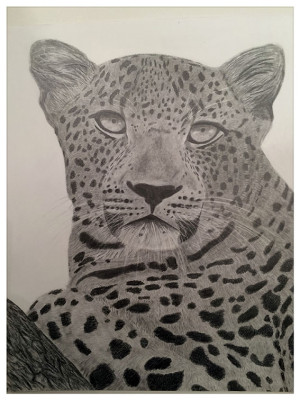 Cheetah by Rob Heanley